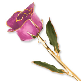 Lacquer Dipped Gold Trim Lilac Pink Rose